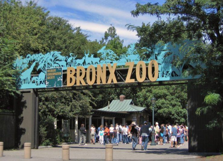 Séjour linguistique New York : visiter le zoo du Bronx