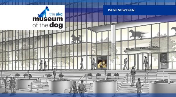 lec-sejour-linguistique-new-york-dog-museum